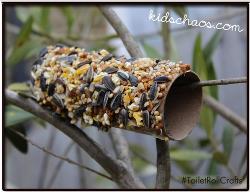 Toilet Paper Roll Bird Seed Feeder